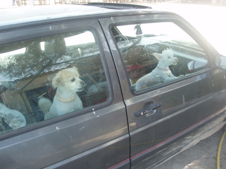 dogs-in-car.jpg